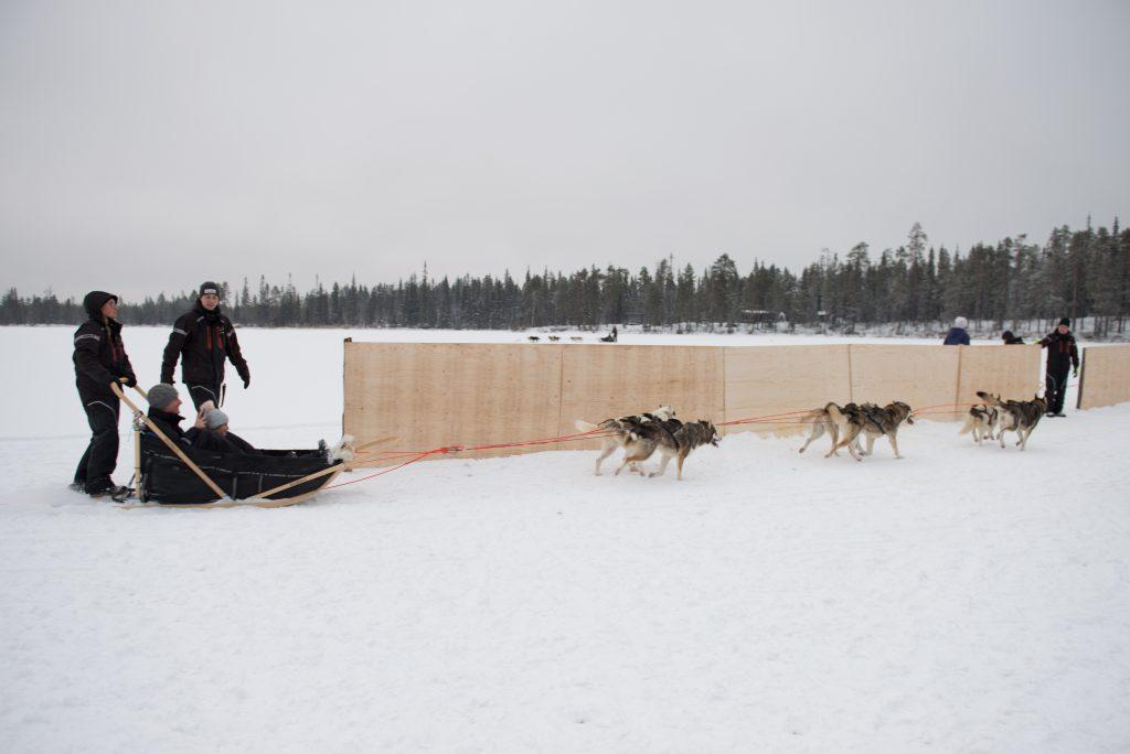 Husky rides Lapland